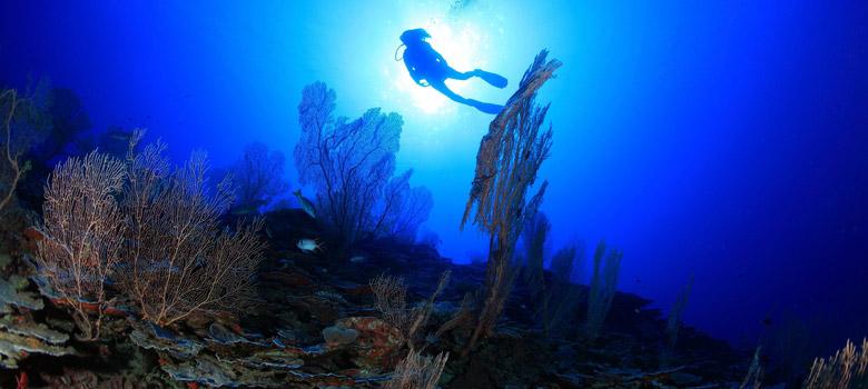 Scuba Diving Tank One