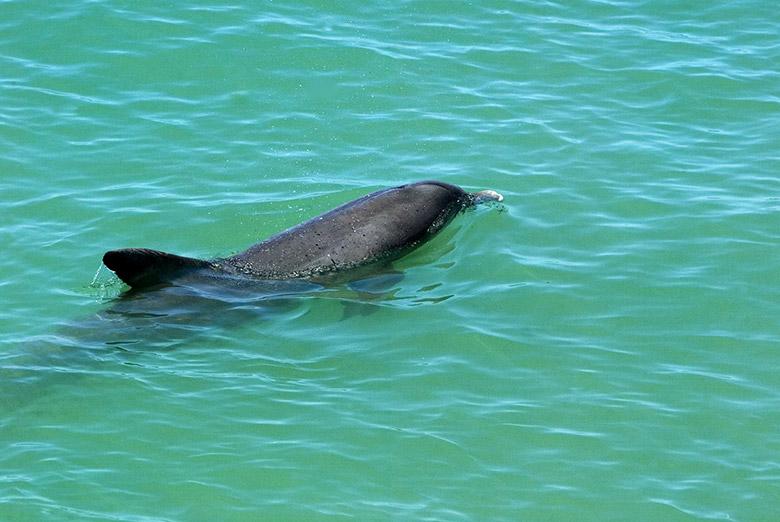 Dolphin Primax Xcaret